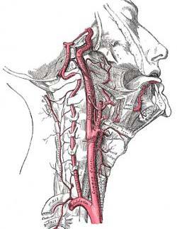Anatomiadellasottomissioni_html_m492128e2