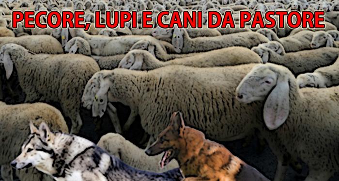 """Il gregge di pecore utilizzato per le riprese di una scena del film """"L'ultimo pastore della citta'"""" passegiano in piazza Duomo, 1 ottobre 2011. ANSA/DANIEL DAL ZENNARO"""